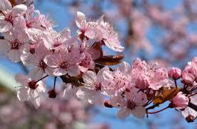 hooikoorts allergie verkoudheid acupunctuur